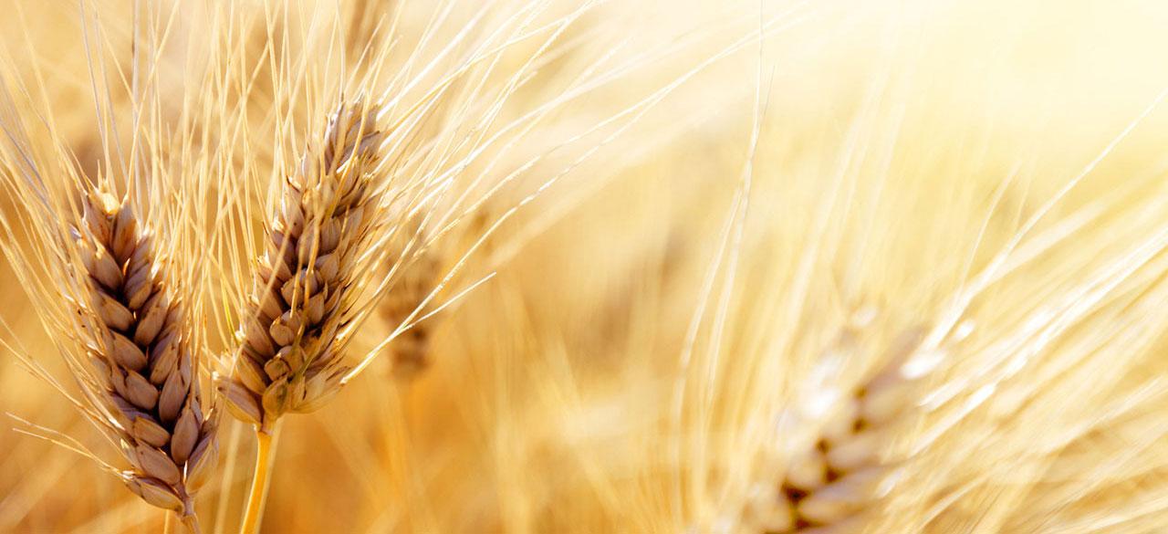 SG Commodity | Grains